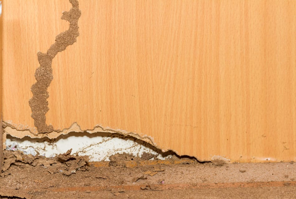 do termites eat particle board