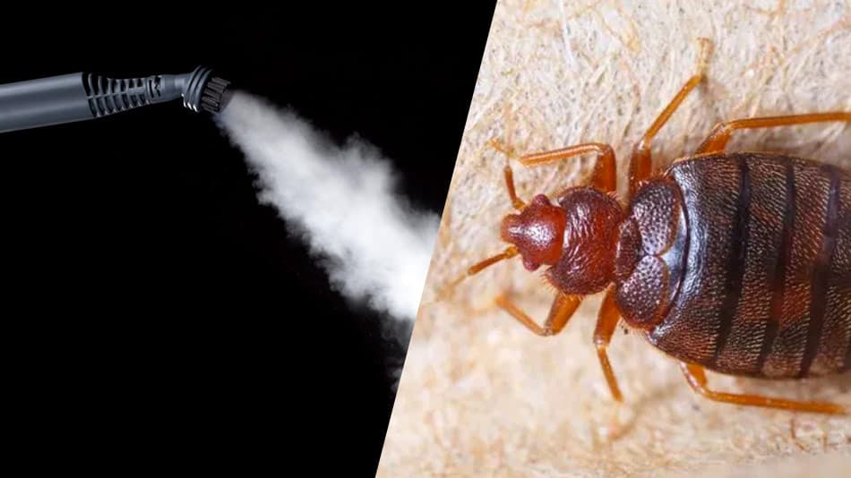 how do you use a mcculloch steam cleaner for bed bugs