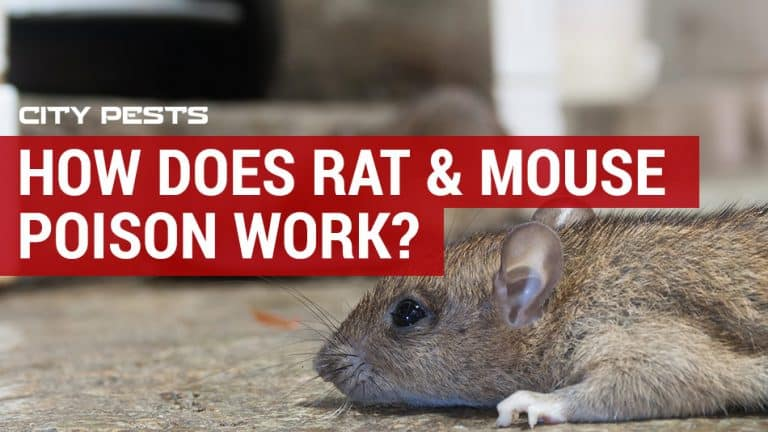 how does rat mouse poison work