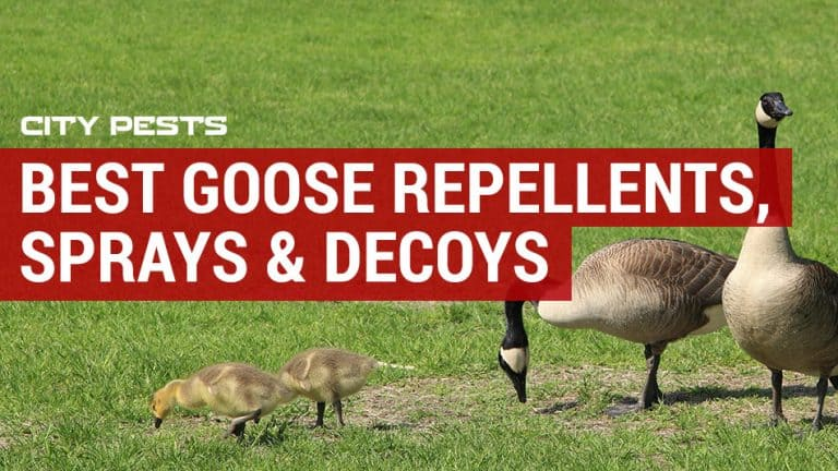 best geese repellents