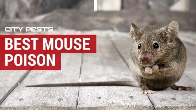 best mouse poison reviews