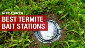 best termite bait station reviews