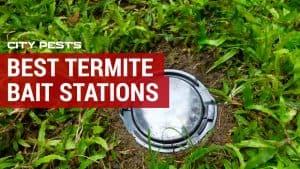 best termite bait station reviews
