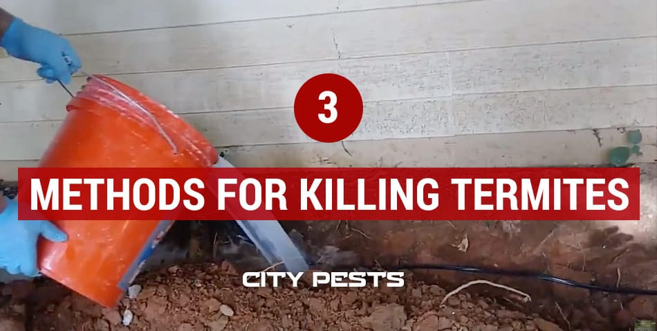 best ways to kill termites