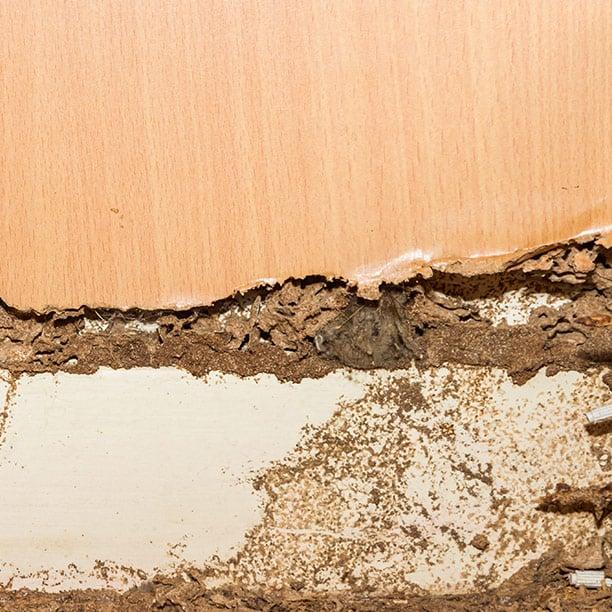dampwood termite damage