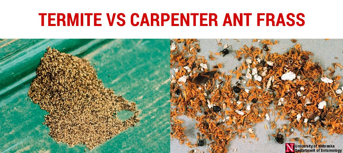 differences between termite frass and carpenter ant frass