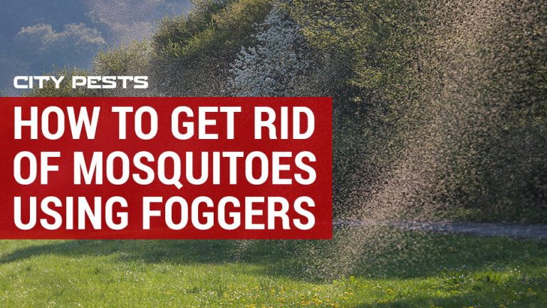 how to get rid of mosquitoes using foggers