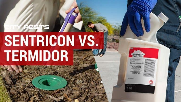 sentricon vs termidor which termite treatment is best