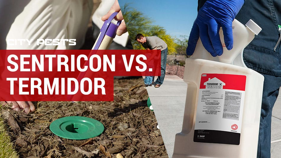 sentricon vs termidor which termite treatment is best