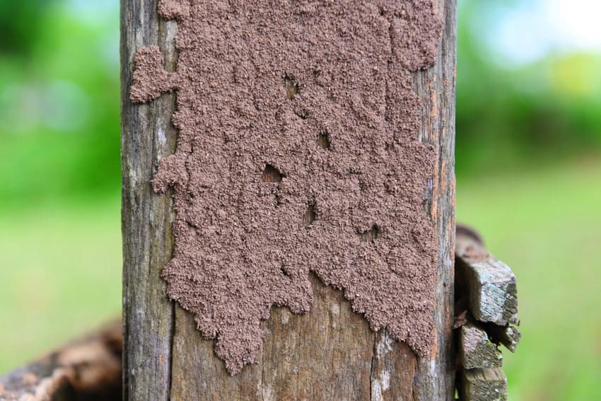signs of termite damage on wooden stump