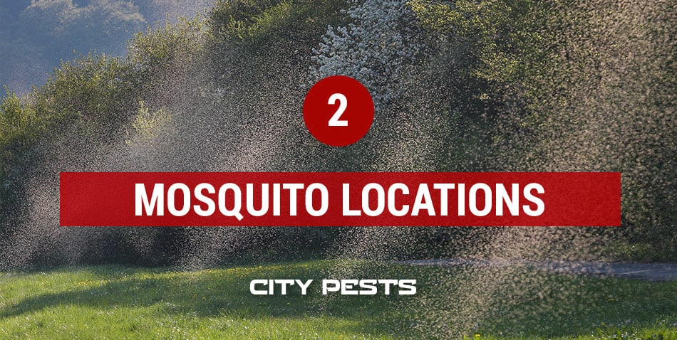 where do you find mosquitoes
