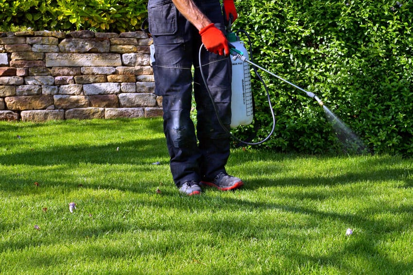 using a pressure sprayer for weeds on lawn