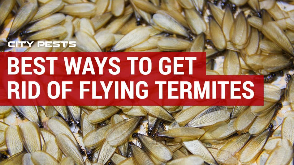 best ways to get rid of flying termites