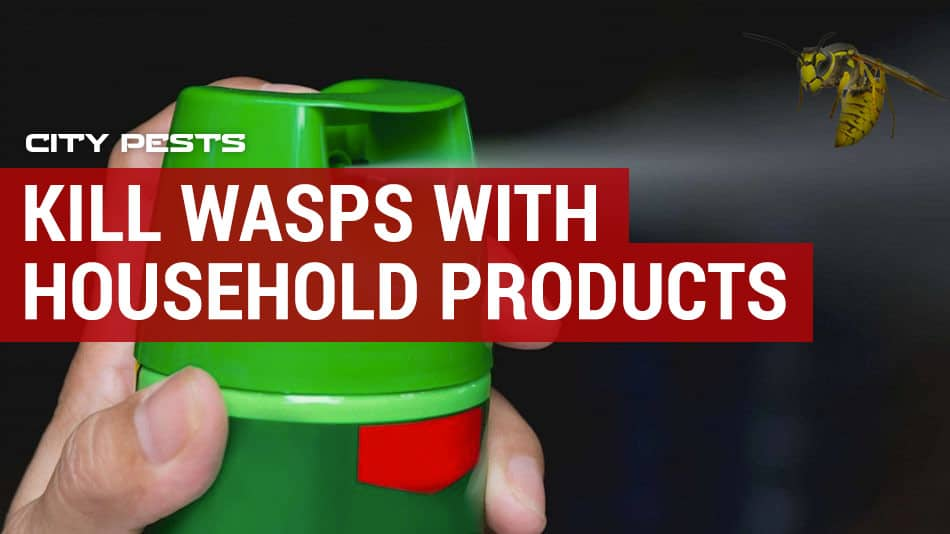 can you kill wasps with household products and cleaners