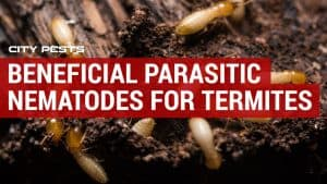 Beneficial Parasitic Nematodes for Termites