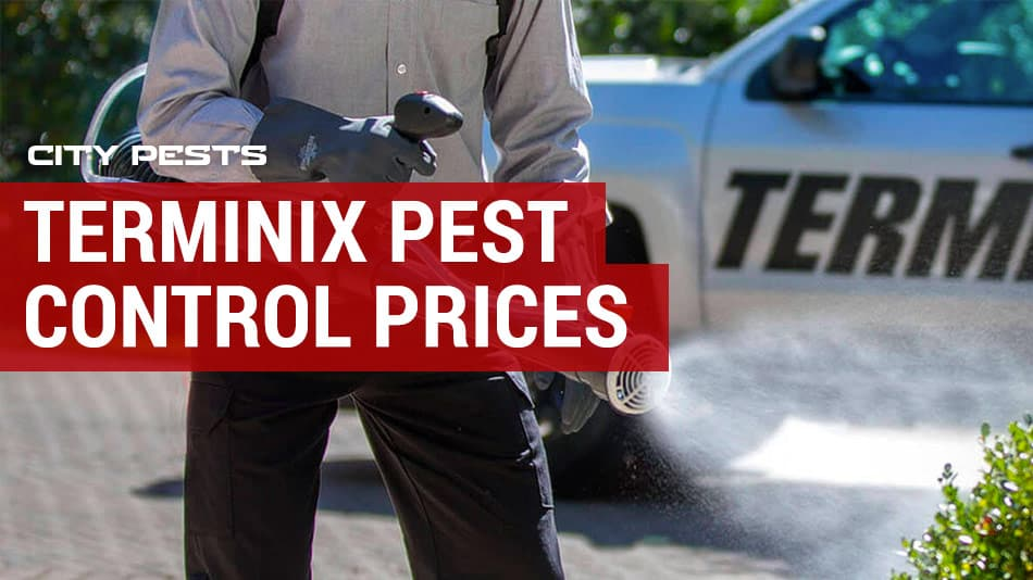 terminix pest control prices