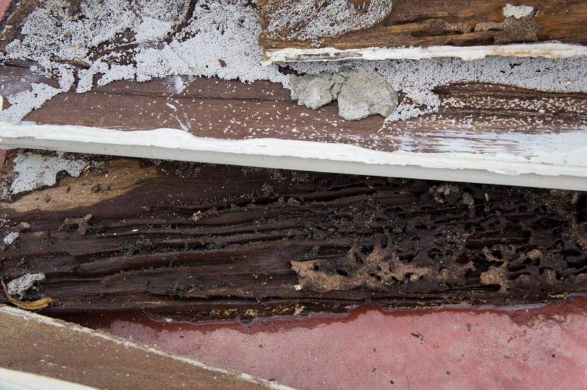 termite damaged wood