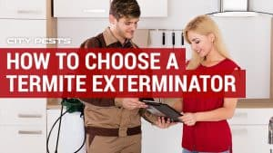 how to choose a termite exterminator