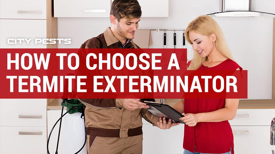 how to choose a termite exterminator