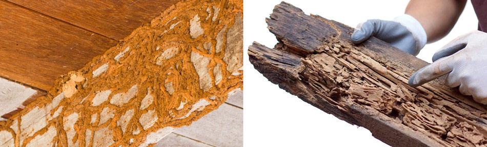 termite damage vs carpenter ant damage
