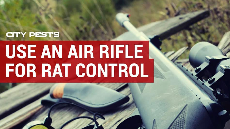 use an air rifle for rat control
