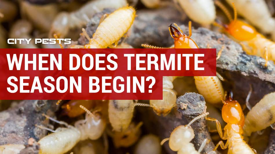 when does termite season begin