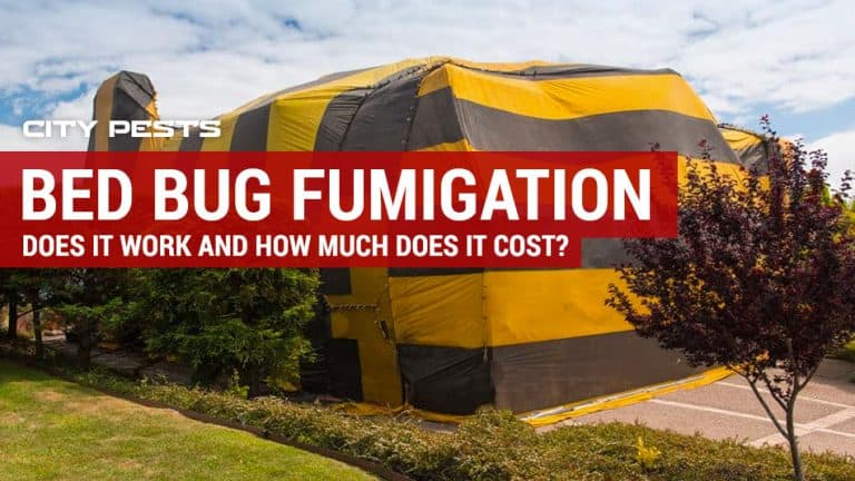 bed bug fumigation cost
