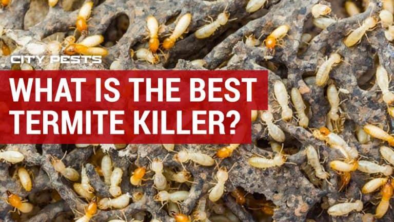 best termite killers