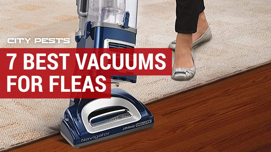 best vacuums for fleas