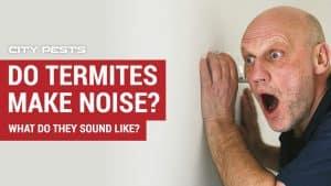 do termites make noise