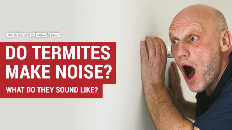 do termites make noise