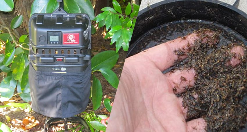 how do mosquito traps work