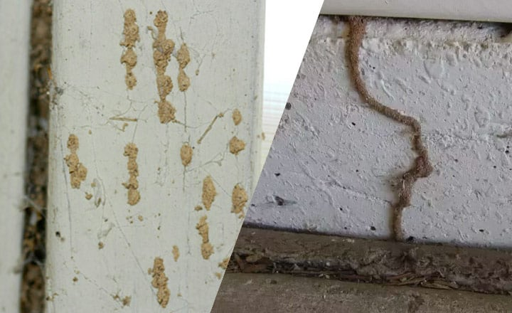 signs you have termites in your walls