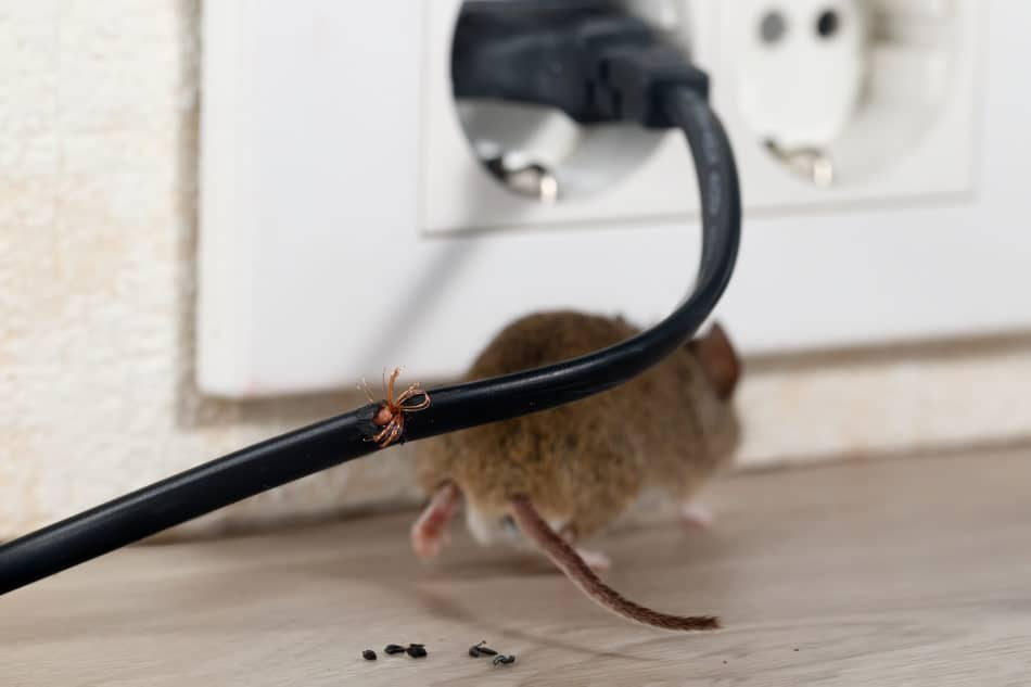 mice cause damage to your home