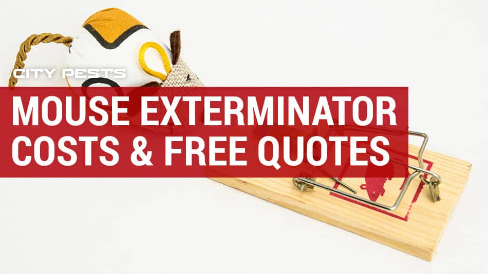 how much does a mouse exterminator cost