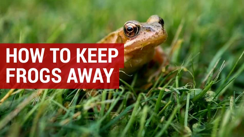 how to keep frogs away