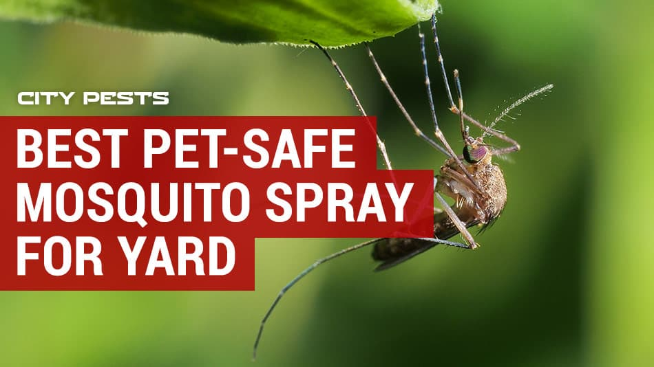 best pet safe mosquito spray for yard