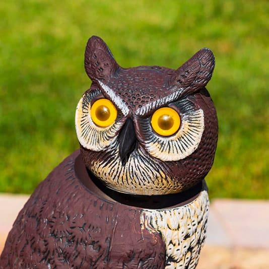 fake owl to scare birds
