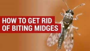 get rid of biting midges