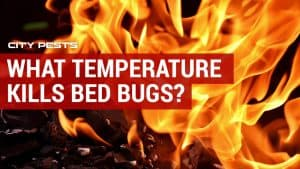 what temperature kills bed bugs