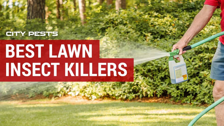 best lawn insect killers
