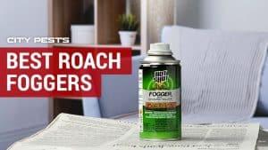 best roach foggers