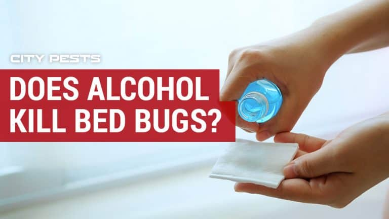 does alcohol kill bed bugs