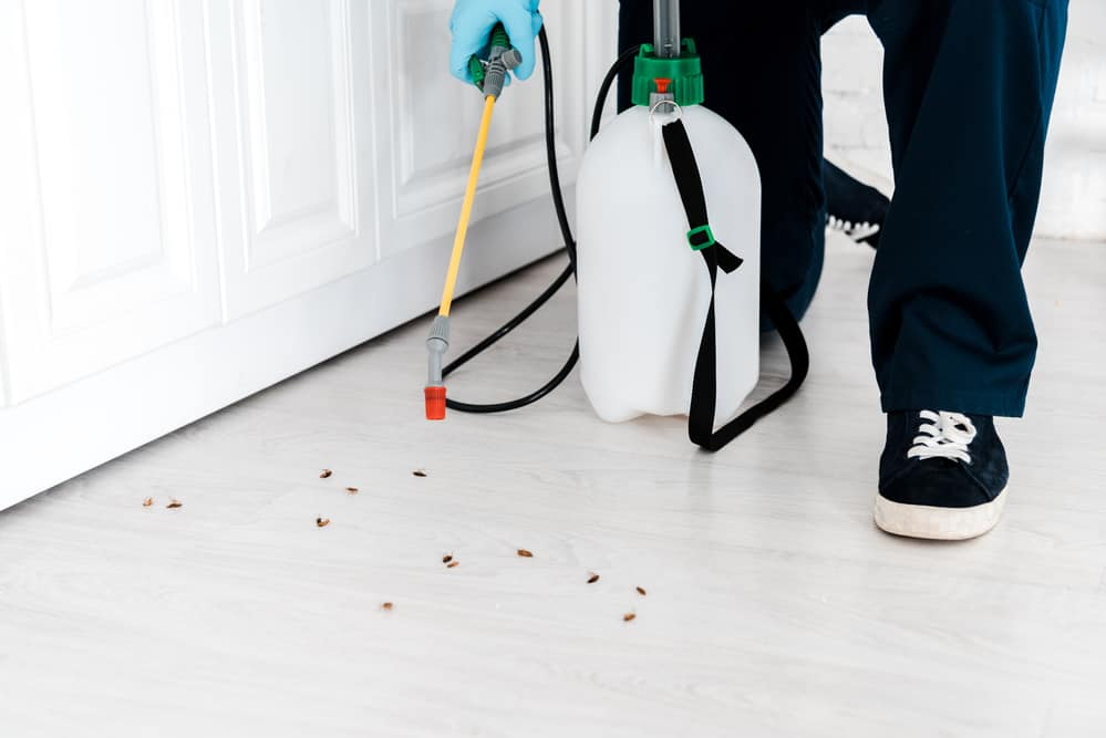 Toxic equipment for cockroach infestation